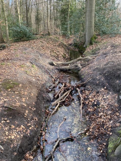 Dämmerwald