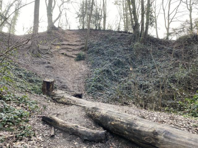 Liedberger Wald