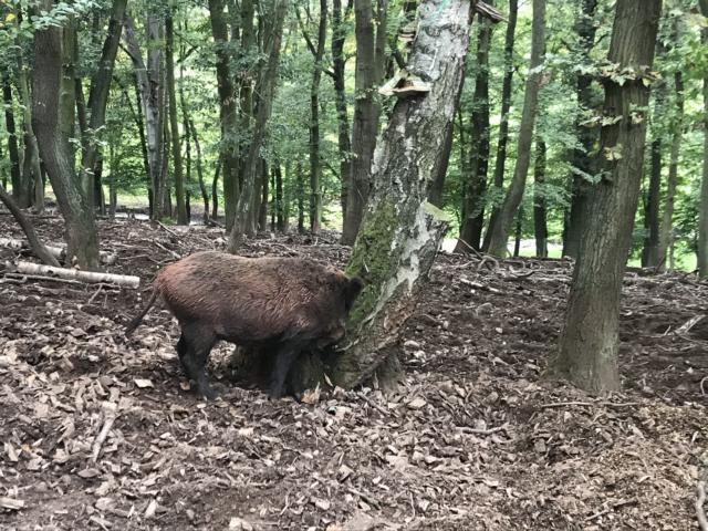 ausflugsziel freizeittipp familie nrw Tiergehege Mechernich Tiere Ausflugsziel Freizeittipp NRW Familie