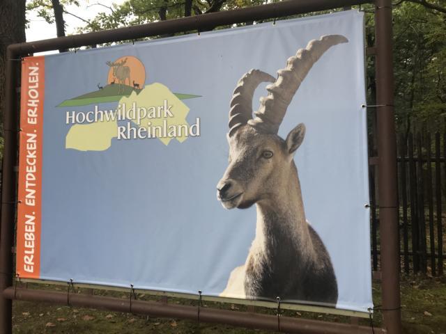 Tiergehege Mechernich Tiere Ausflugsziel Freizeittipp NRW Familie ausflugsziel freizeittipp familie nrw
